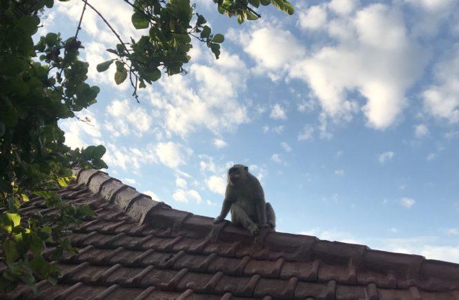 バリ島 観光スポット ウルワツ寺院 猿