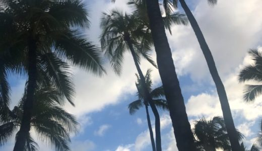ハワイ ワイキキビーチ ヤシのき