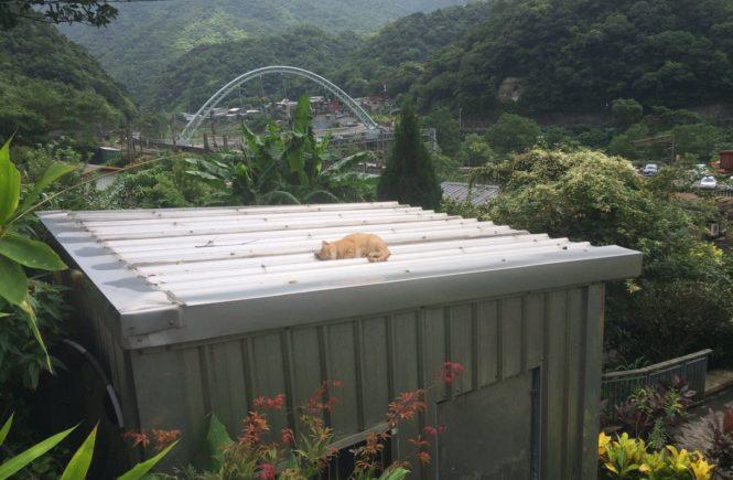 台湾 猫村 猴硐 ホウトン5