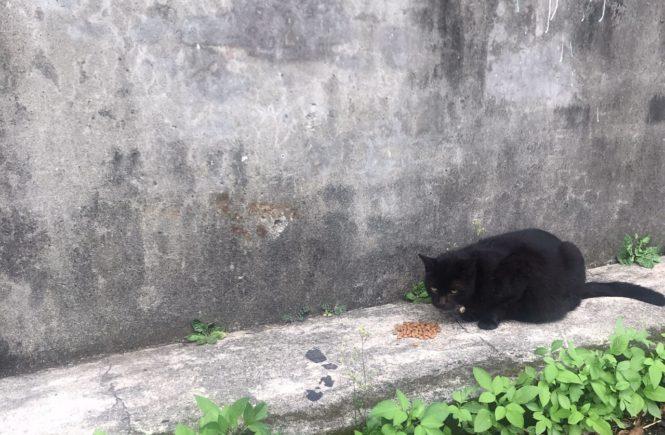 台湾 猫村 猴硐 ホウトン4