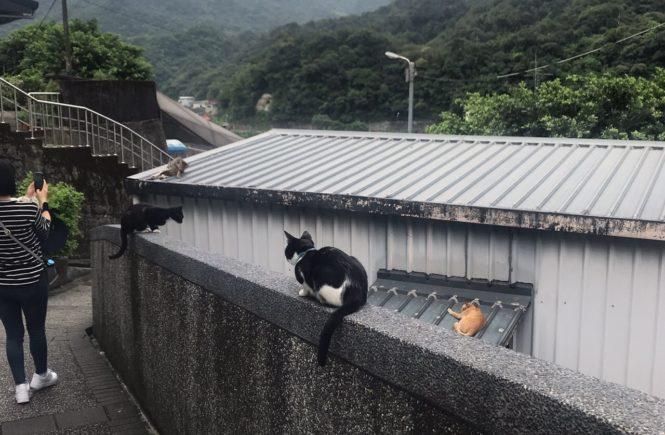 台湾 猫村 猴硐 ホウトン2