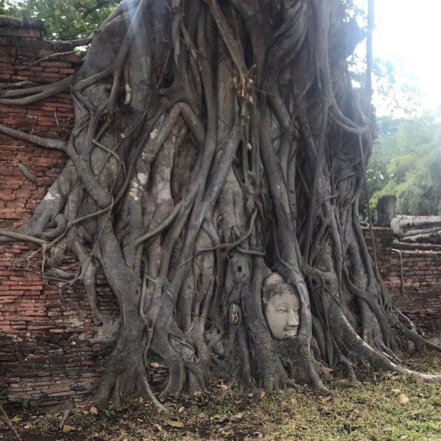 アユタヤ 木の根 仏頭2