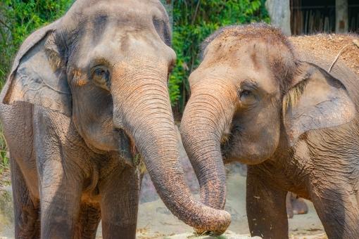 シンガポール 観光 おすすめ シンガポール動物園