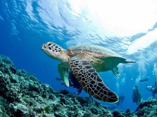 GO TO トラベル 沖縄旅行 慶良間体験ダイビング+シュノーケリング